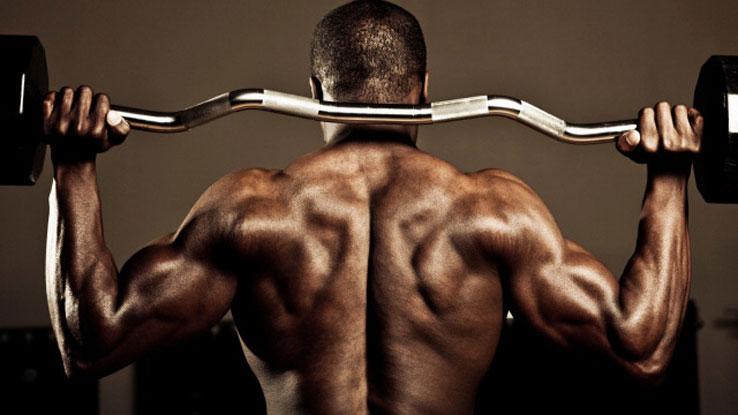Katabolismus und Anabolismus in der Muskelentwicklung