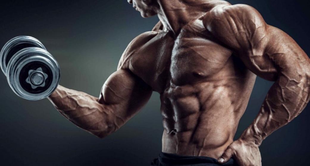 Lernen wir die Grundprinzipien von Bodybuildern kennen